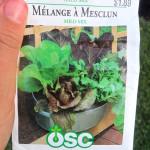 gardening 032
